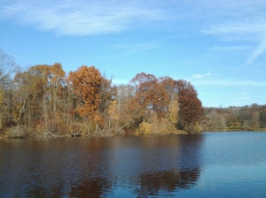Van Cortland Lake in November. (photo taken 11 21 2013)