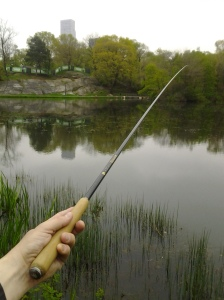 Tenkara fishing along a pond edge. (photo taken 05 08 2014)