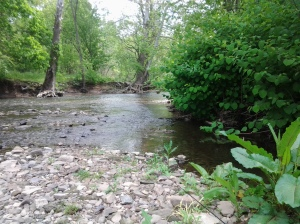 Eastern PA Trout Stream (05 2015)