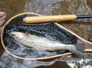 Rainbow Trout (05 2015)