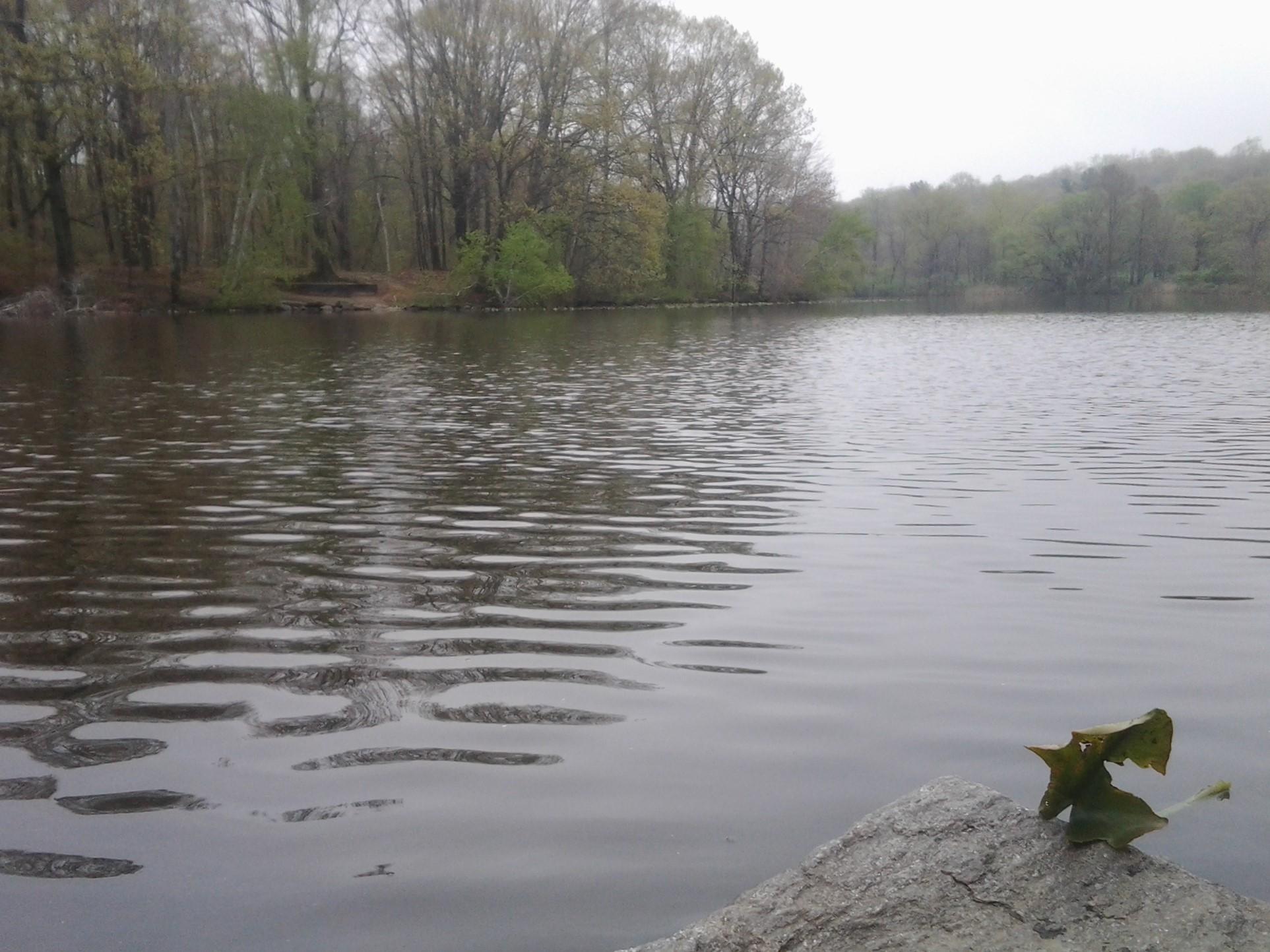 May day grand slam tenkara takes manhattan for Scott and white fish pond